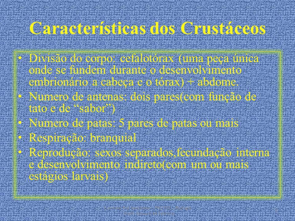 Características dos Crustáceos Divisão do corpo: cefalotórax (uma peça única onde se fundem durante o desenvolvimento embrionário a cabeça e o tórax)
