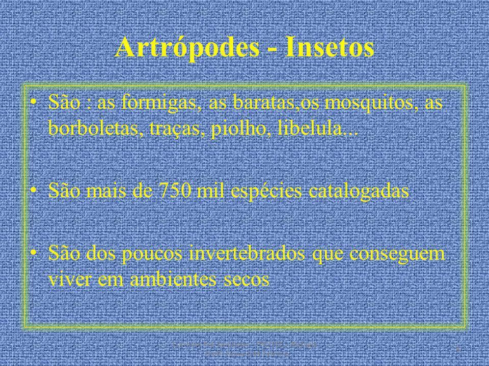 Artrópodes - Insetos São : as formigas, as baratas,os mosquitos, as borboletas, traças, piolho, libelula... São mais de 750 mil espécies catalogadas S