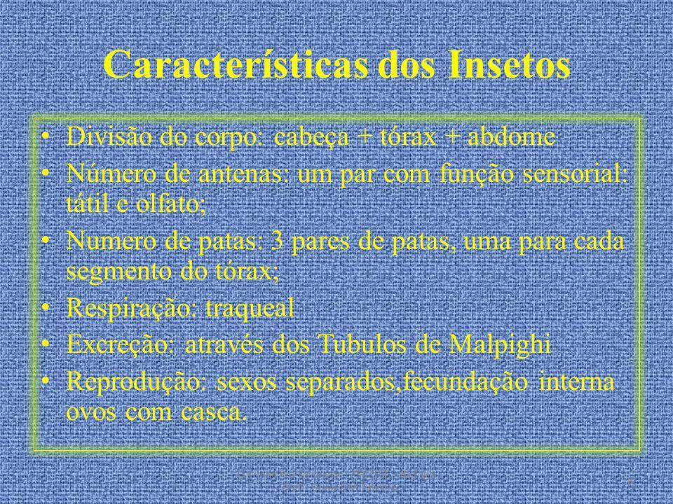 Características dos Insetos Divisão do corpo: cabeça + tórax + abdome Número de antenas: um par com função sensorial: tátil e olfato; Numero de patas: