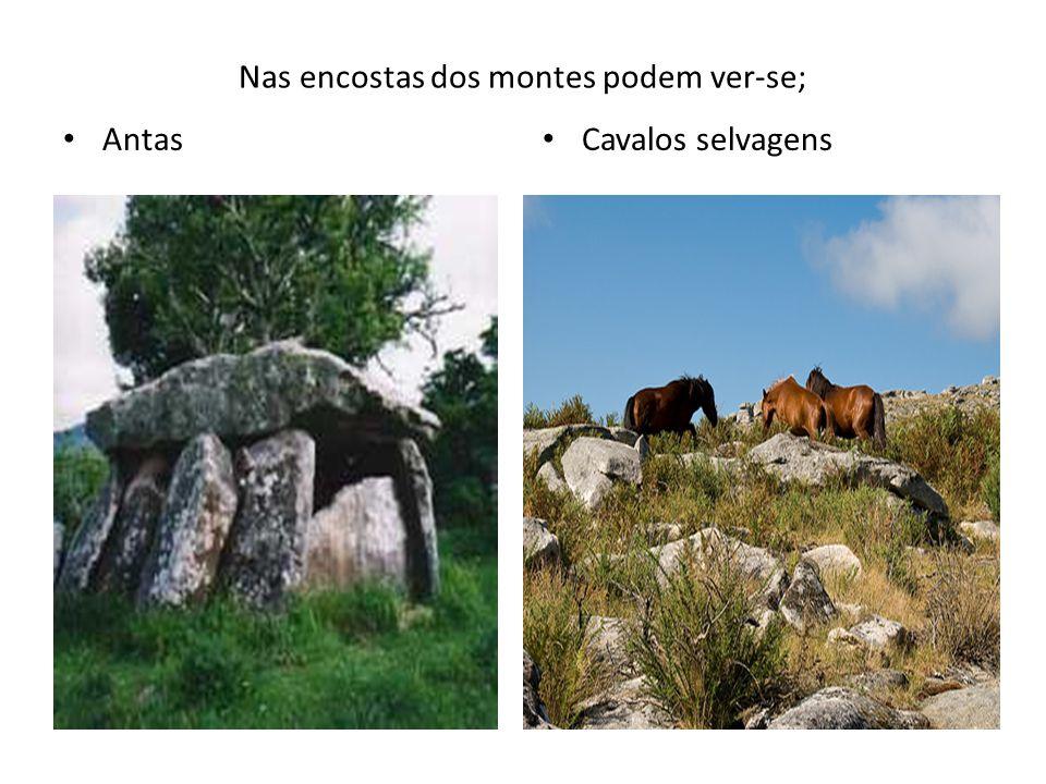 Nas encostas dos montes podem ver-se; Antas Cavalos selvagens