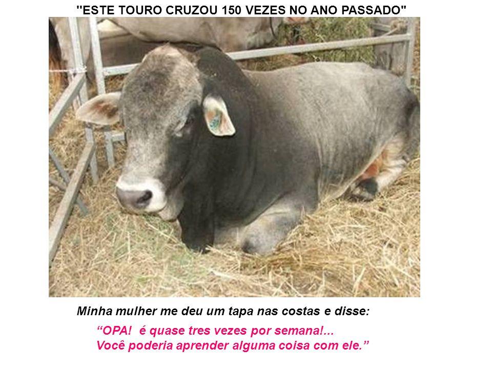 ''ESTE TOURO CRUZOU 150 VEZES NO ANO PASSADO