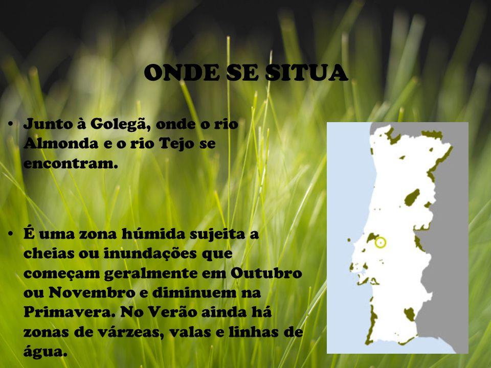 ONDE SE SITUA Junto à Golegã, onde o rio Almonda e o rio Tejo se encontram.