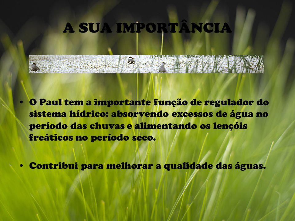 A SUA IMPORTÂNCIA O Paul tem a importante função de regulador do sistema hídrico: absorvendo excessos de água no período das chuvas e alimentando os lençóis freáticos no período seco.