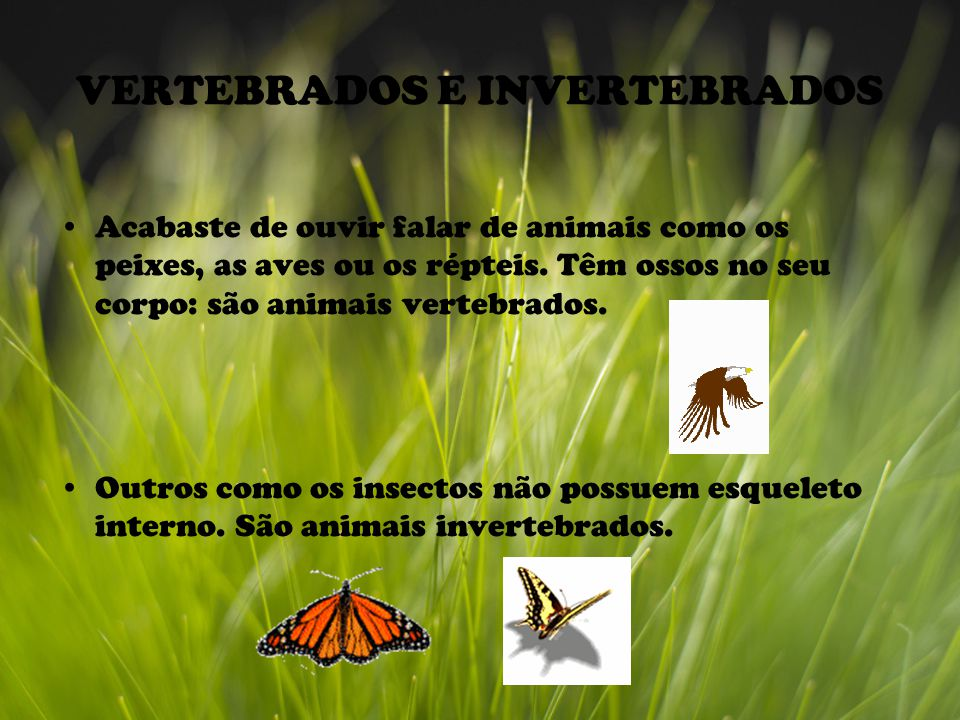 VERTEBRADOS E INVERTEBRADOS Acabaste de ouvir falar de animais como os peixes, as aves ou os répteis. Têm ossos no seu corpo: são animais vertebrados.