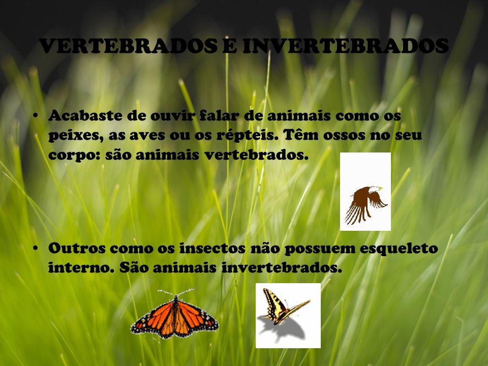 VERTEBRADOS E INVERTEBRADOS Acabaste de ouvir falar de animais como os peixes, as aves ou os répteis.