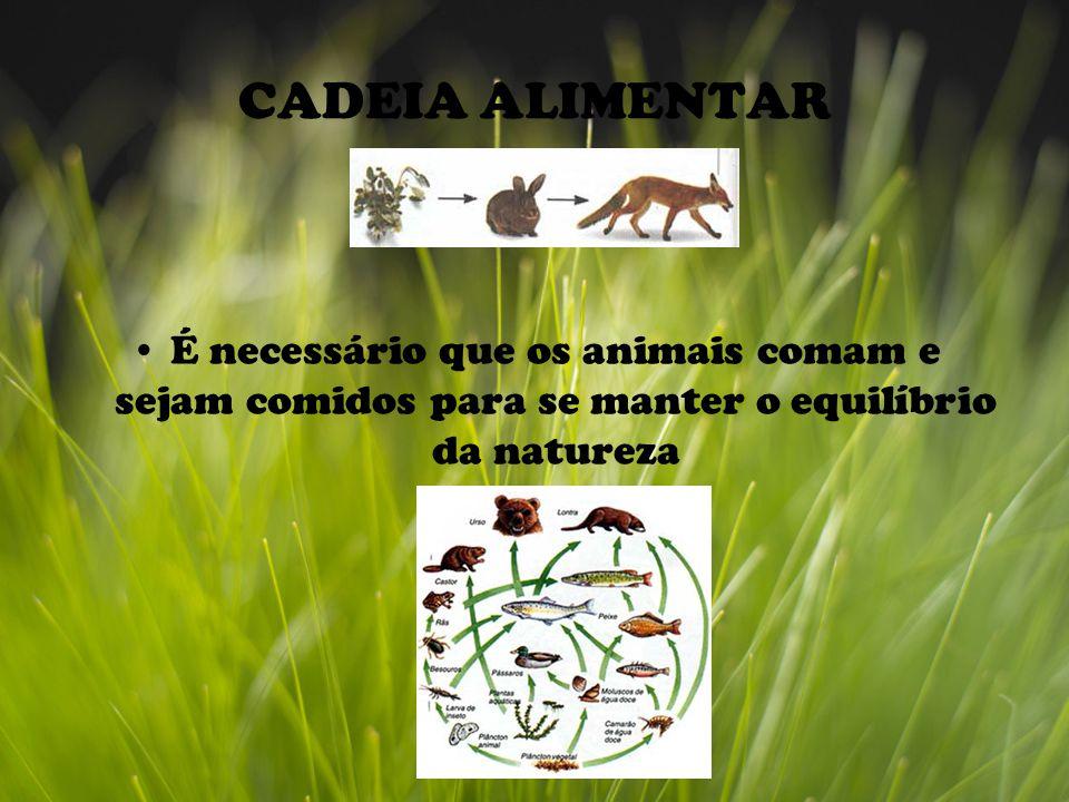 CADEIA ALIMENTAR É necessário que os animais comam e sejam comidos para se manter o equilíbrio da natureza