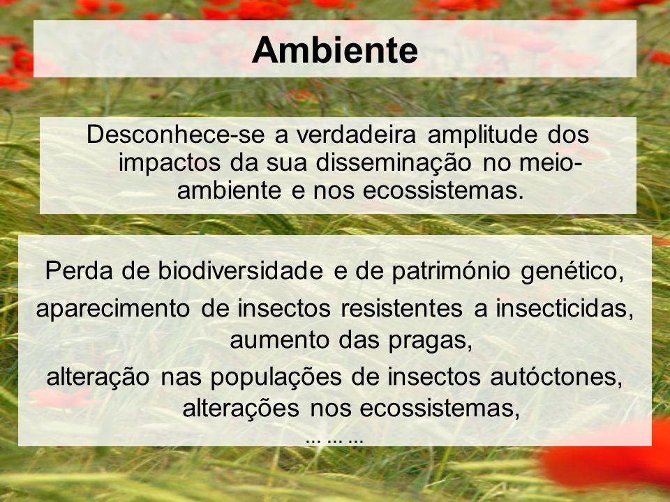 Ambiente Perda de biodiversidade e de património genético, aparecimento de insectos resistentes a insecticidas, aumento das pragas, alteração nas populações de insectos autóctones, alterações nos ecossistemas, … … … Desconhece-se a verdadeira amplitude dos impactos da sua disseminação no meio- ambiente e nos ecossistemas.