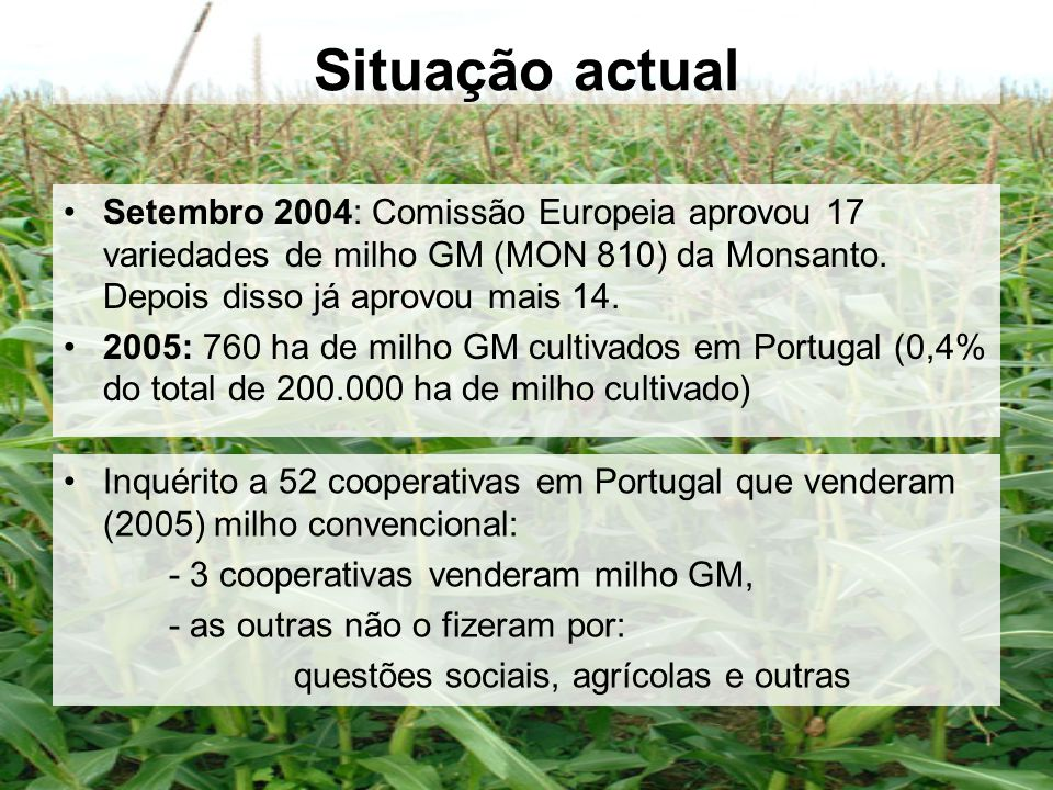 Situação actual Setembro 2004: Comissão Europeia aprovou 17 variedades de milho GM (MON 810) da Monsanto. Depois disso já aprovou mais 14. 2005: 760 h