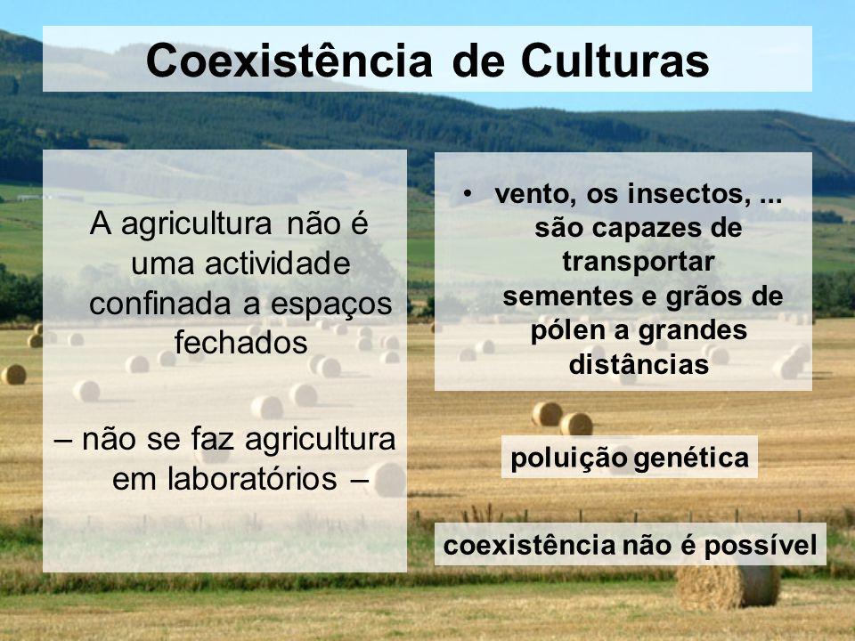 Coexistência de Culturas A agricultura não é uma actividade confinada a espaços fechados – não se faz agricultura em laboratórios – vento, os insectos