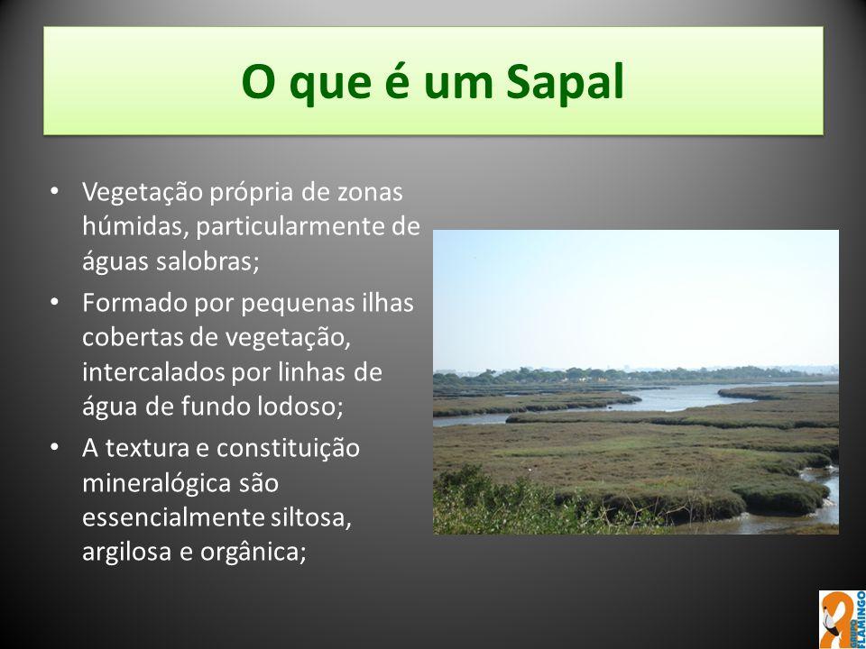 O que é um Sapal Vegetação própria de zonas húmidas, particularmente de águas salobras; Formado por pequenas ilhas cobertas de vegetação, intercalados