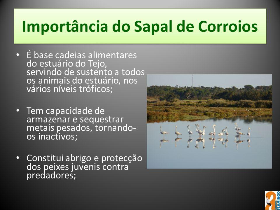Importância do Sapal de Corroios É base cadeias alimentares do estuário do Tejo, servindo de sustento a todos os animais do estuário, nos vários nívei