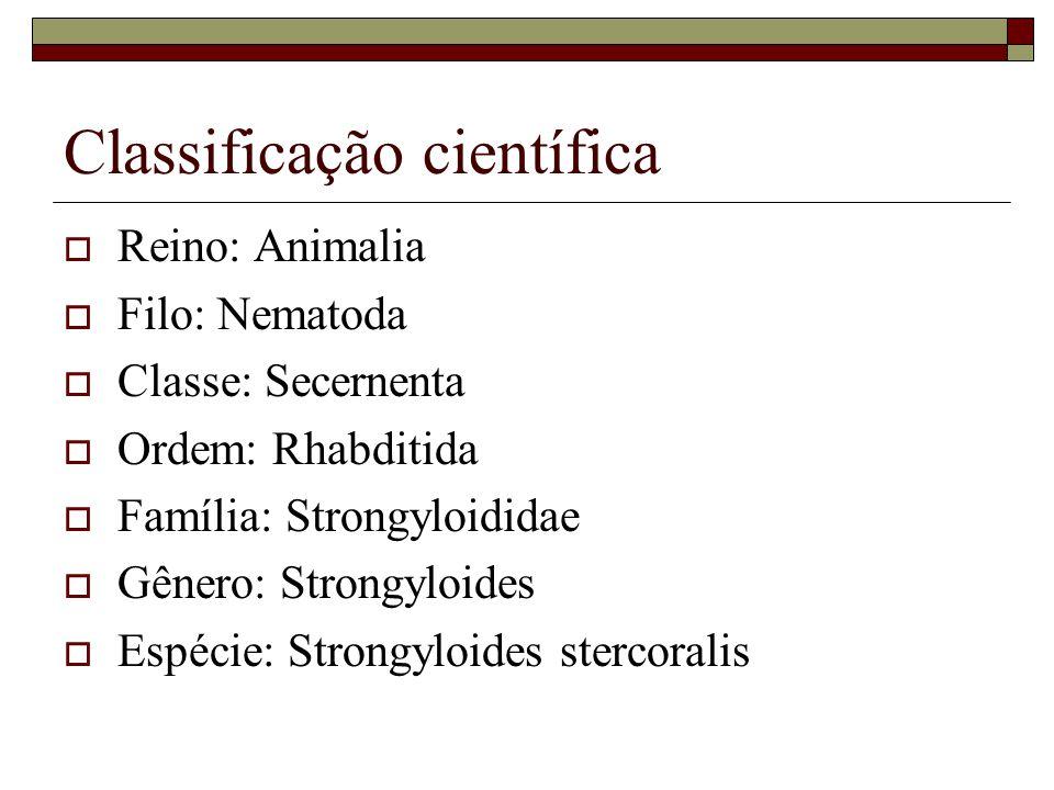 Morfologia A única forma parasitária adulta, no intestino delgado humano é a: FÊMEA PARTENOGENÉTICA.