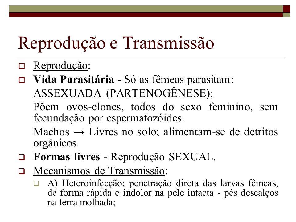 Reprodução e Transmissão Reprodução: Vida Parasitária - Só as fêmeas parasitam: ASSEXUADA (PARTENOGÊNESE); Põem ovos-clones, todos do sexo feminino, sem fecundação por espermatozóides.