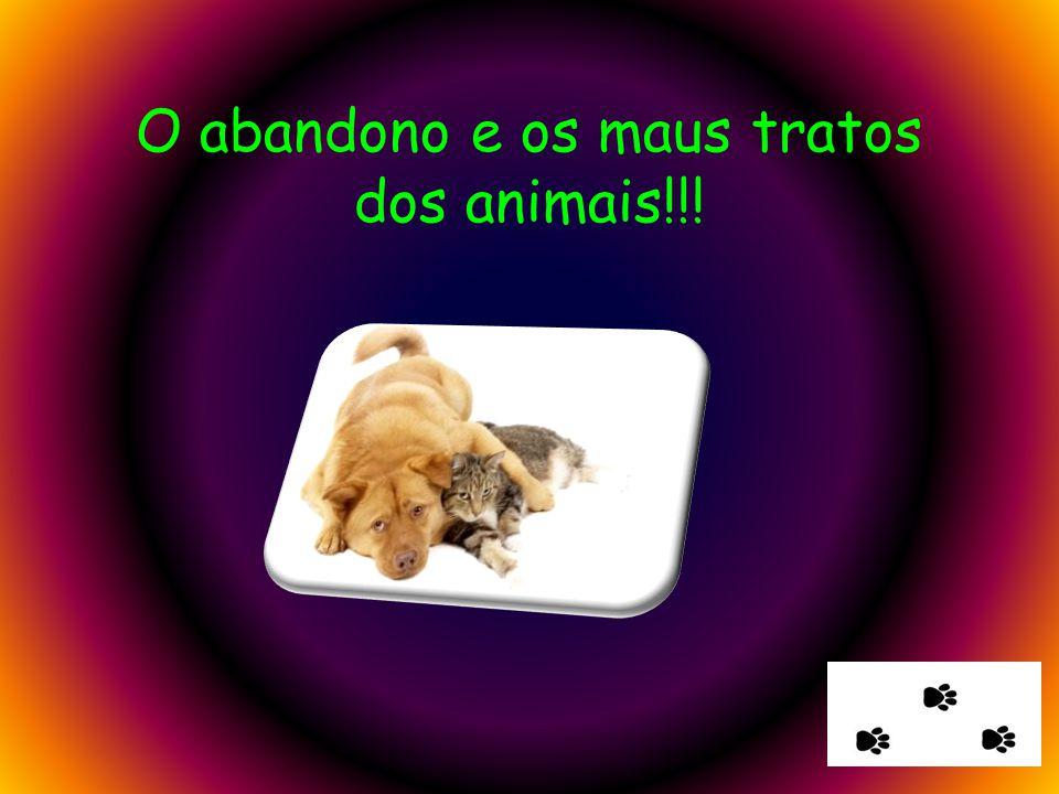 O abandono e os maus tratos dos animais!!!