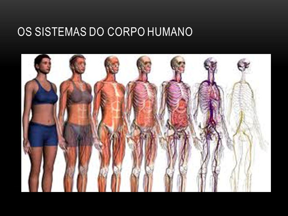 OS SISTEMAS DO CORPO HUMANO