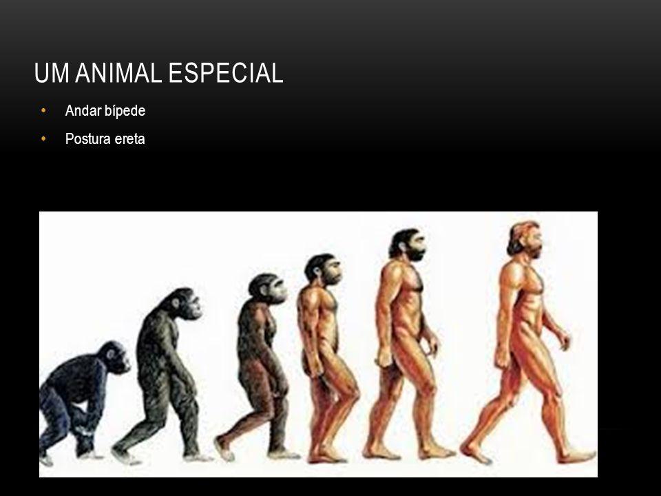 UM ANIMAL ESPECIAL Andar bípede Postura ereta