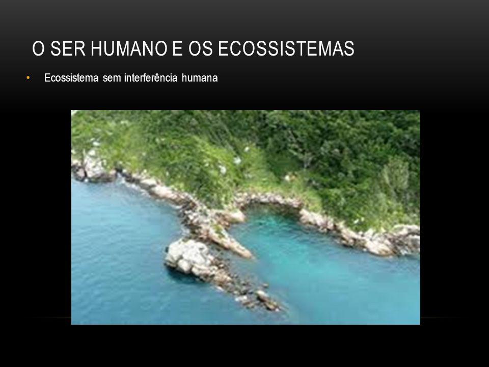 O SER HUMANO E OS ECOSSISTEMAS Ecossistema sem interferência humana
