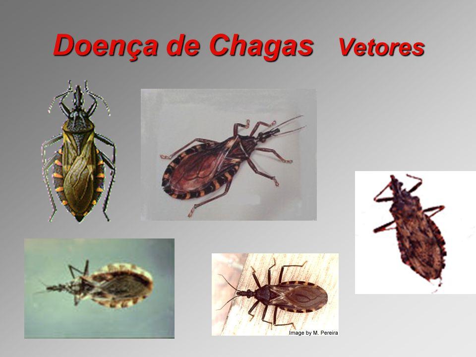 Doença de Chagas Vetores