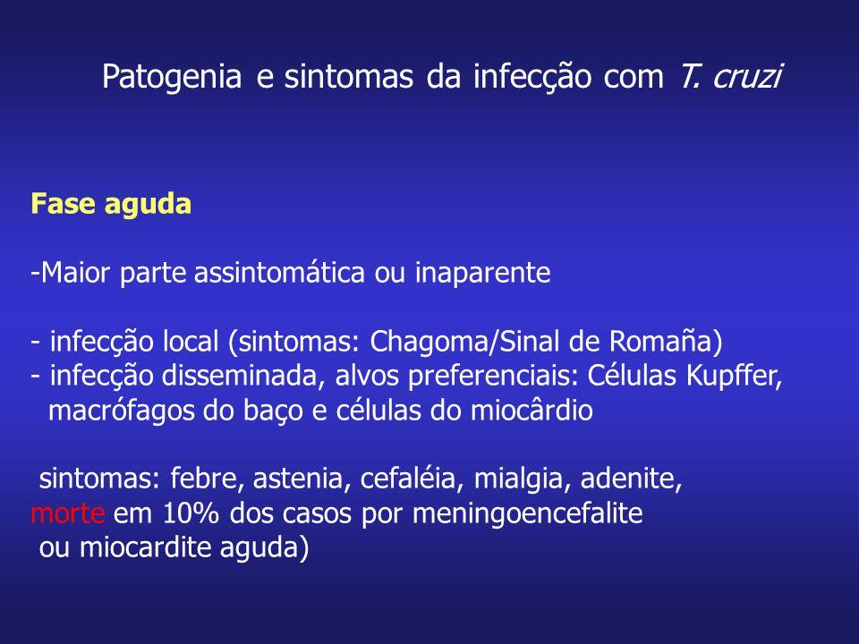 Patogenia e sintomas da infecção com T. cruzi Fase aguda -Maior parte assintomática ou inaparente - infecção local (sintomas: Chagoma/Sinal de Romaña)