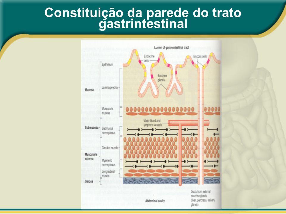 Constituição da parede do trato gastrintestinal