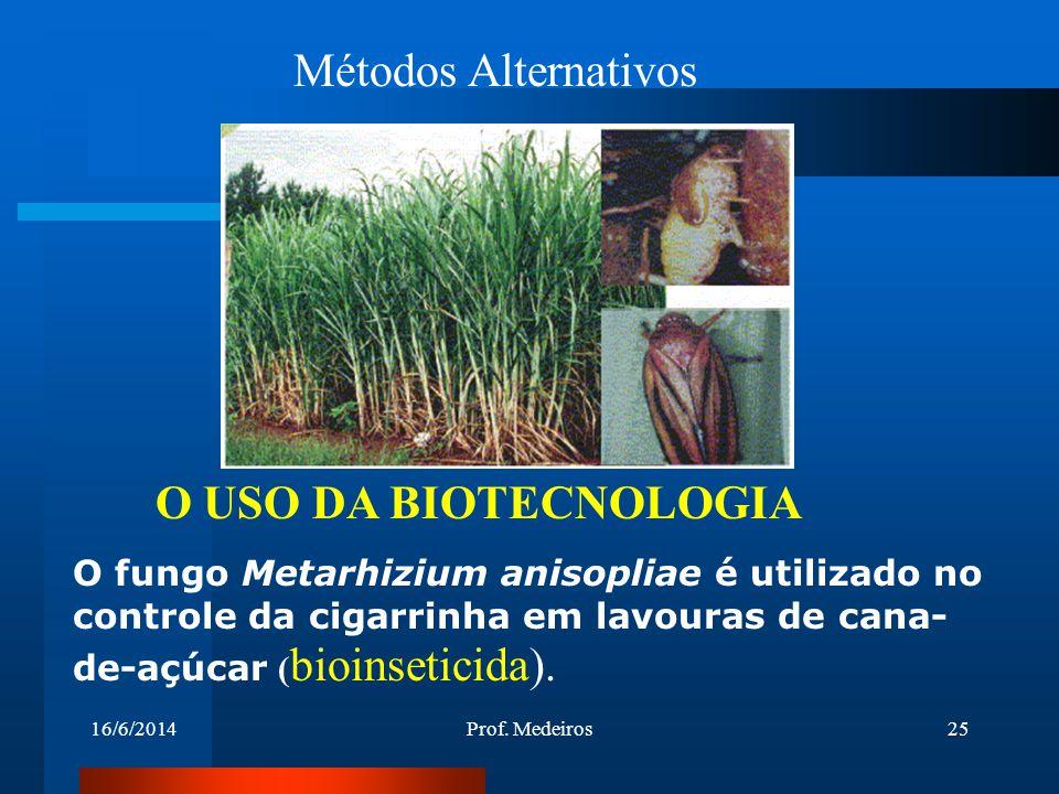 16/6/2014Prof. Medeiros25 Métodos Alternativos O USO DA BIOTECNOLOGIA O fungo Metarhizium anisopliae é utilizado no controle da cigarrinha em lavouras