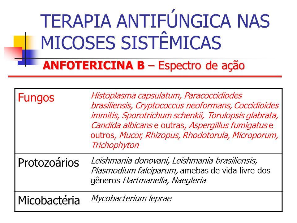 ANFOTERICINA B – Espectro de ação TERAPIA ANTIFÚNGICA NAS MICOSES SISTÊMICAS Fungos Histoplasma capsulatum, Paracoccidiodes brasiliensis, Cryptococcus neoformans, Coccidioides immitis, Sporotrichum schenkii, Torulopsis glabrata, Candida albicans e outras, Aspergillus fumigatus e outros, Mucor, Rhizopus, Rhodotorula, Microporum, Trichophyton Protozoários Leishmania donovani, Leishmania brasiliensis, Plasmodium falciparum, amebas de vida livre dos gêneros Hartmanella, Naegleria Micobactéria Mycobacterium leprae