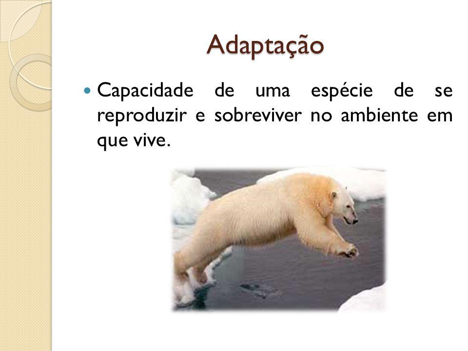 Adaptação Capacidade de uma espécie de se reproduzir e sobreviver no ambiente em que vive.