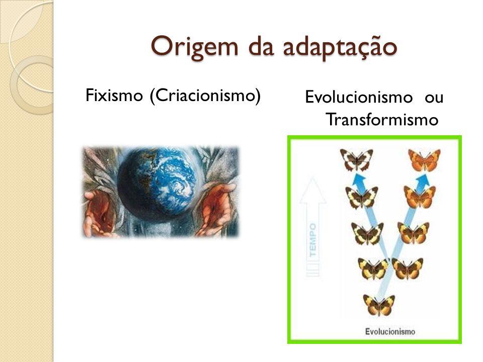 Origem da adaptação Fixismo (Criacionismo) Evolucionismo ou Transformismo