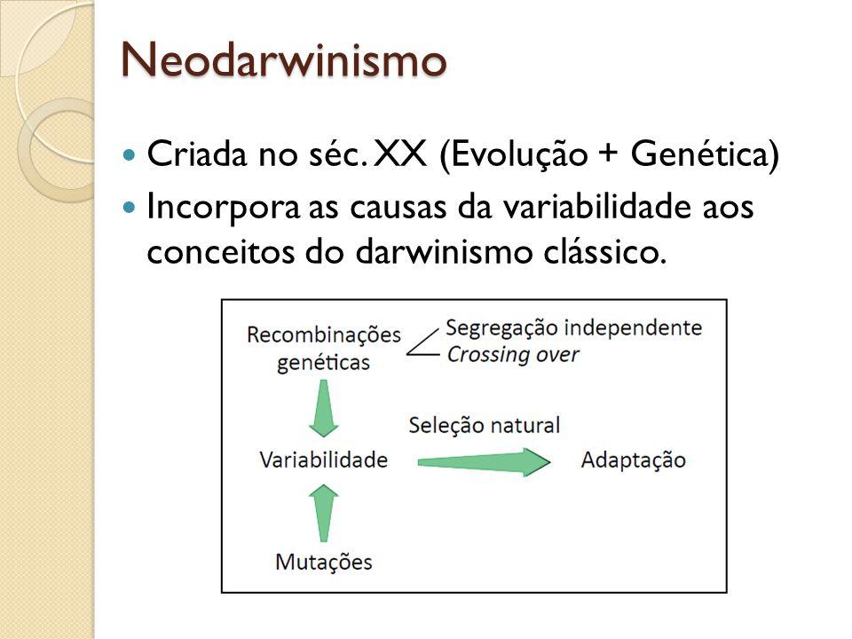 Neodarwinismo Criada no séc. XX (Evolução + Genética) Incorpora as causas da variabilidade aos conceitos do darwinismo clássico.