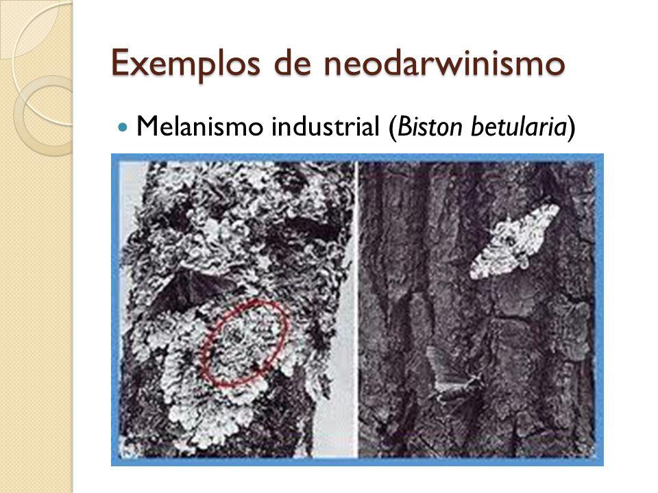 Exemplos de neodarwinismo Melanismo industrial (Biston betularia)