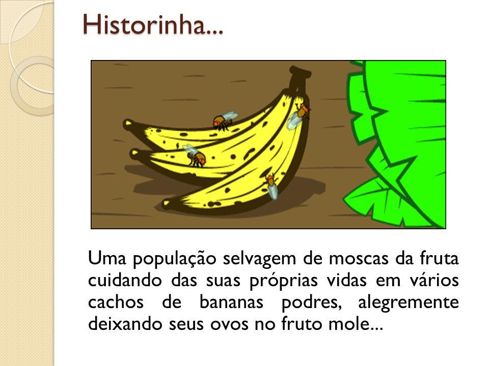 Uma população selvagem de moscas da fruta cuidando das suas próprias vidas em vários cachos de bananas podres, alegremente deixando seus ovos no fruto mole...