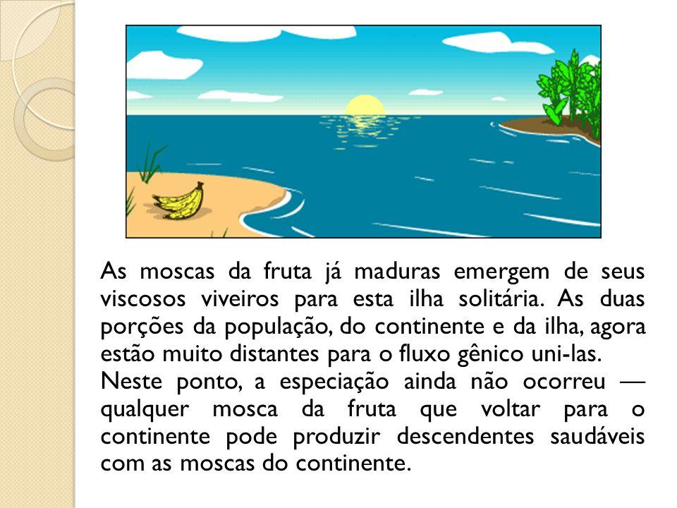 As moscas da fruta já maduras emergem de seus viscosos viveiros para esta ilha solitária. As duas porções da população, do continente e da ilha, agora