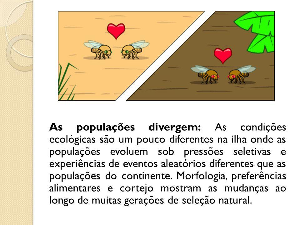 As populações divergem: As condições ecológicas são um pouco diferentes na ilha onde as populações evoluem sob pressões seletivas e experiências de ev