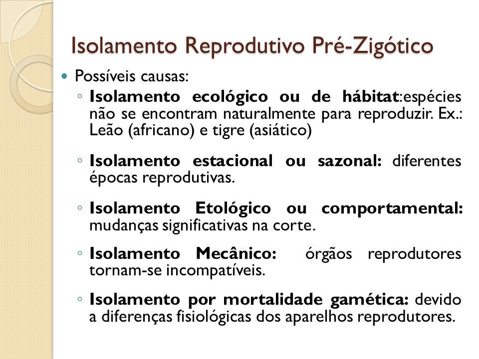 Isolamento Reprodutivo Pré-Zigótico Possíveis causas: Isolamento ecológico ou de hábitat:espécies não se encontram naturalmente para reproduzir. Ex.: