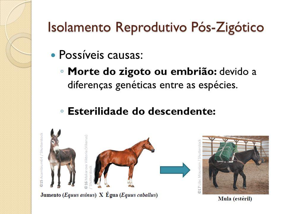 Possíveis causas: Morte do zigoto ou embrião: devido a diferenças genéticas entre as espécies.