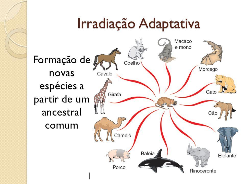 Irradiação Adaptativa Formação de novas espécies a partir de um ancestral comum