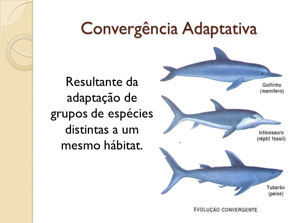 Convergência Adaptativa Resultante da adaptação de grupos de espécies distintas a um mesmo hábitat.