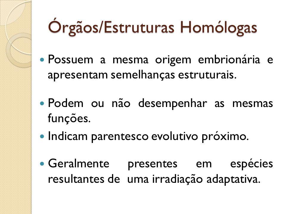Órgãos/Estruturas Homólogas Possuem a mesma origem embrionária e apresentam semelhanças estruturais.