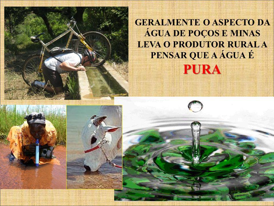 CFMV/CNSA GERALMENTE O ASPECTO DA ÁGUA DE POÇOS E MINAS LEVA O PRODUTOR RURAL A PENSAR QUE A ÁGUA ÉPURA