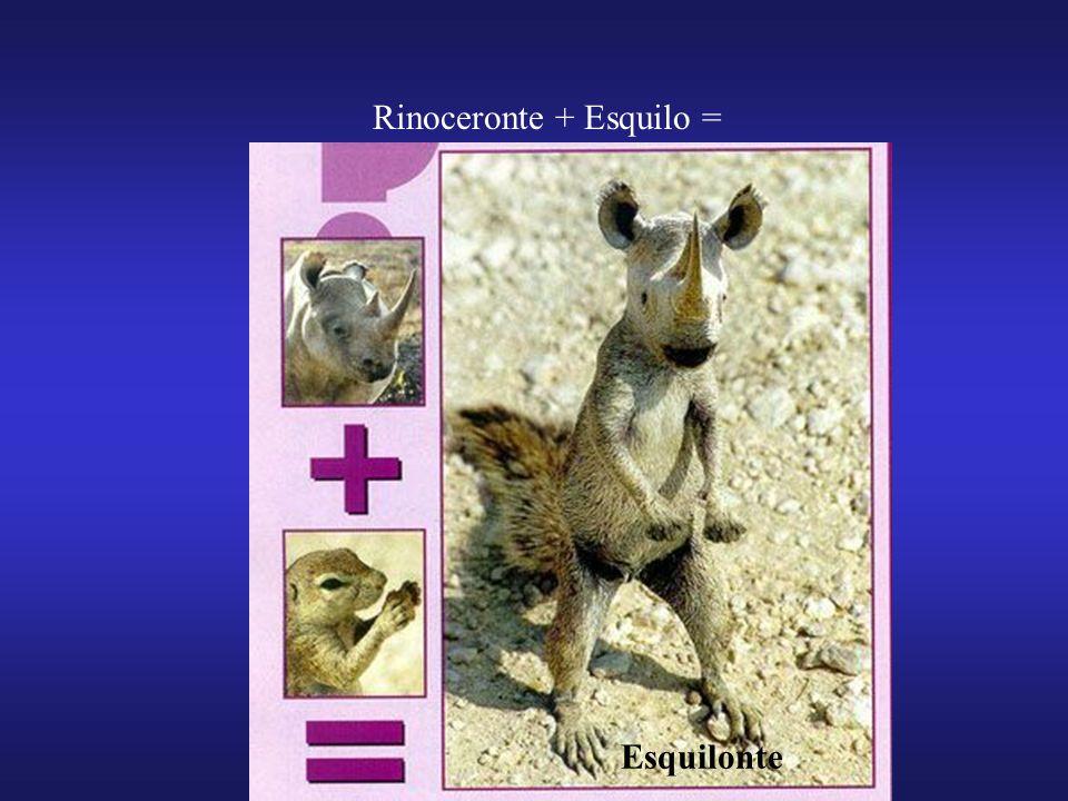 Rinoceronte + Esquilo = Esquilonte