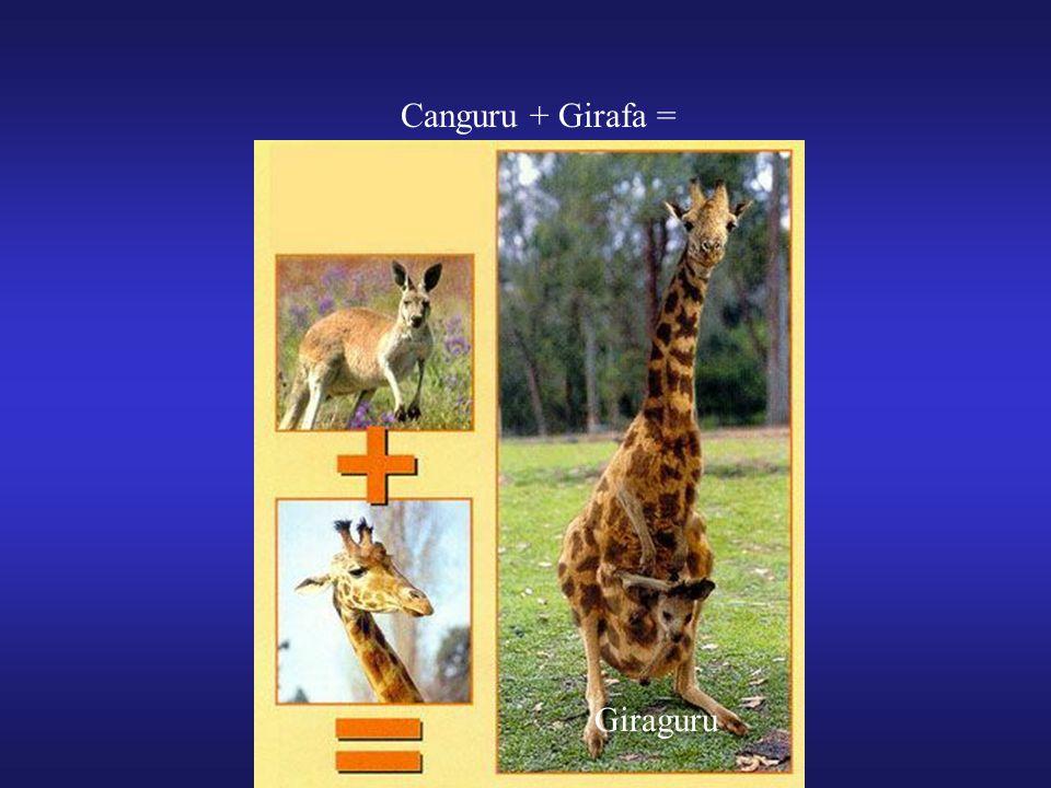 Canguru + Girafa = Giraguru
