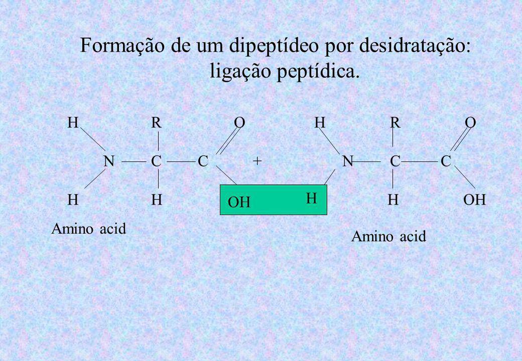 Formação de um dipeptídeo por desidratação: ligação peptídica.