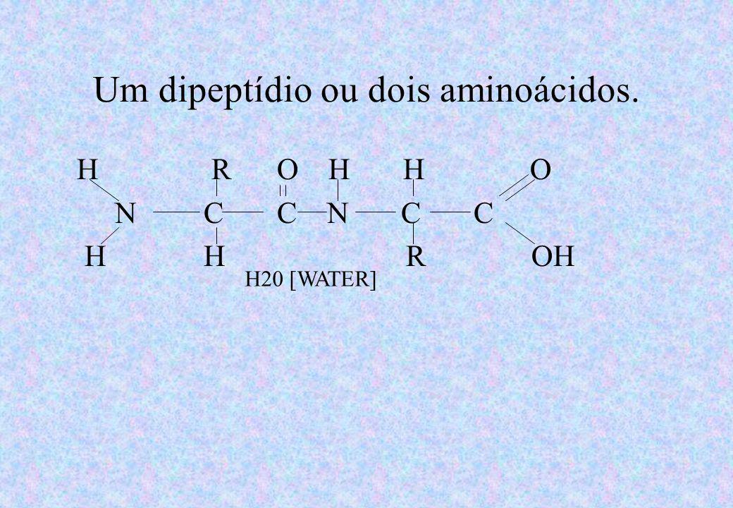 Formação de um dipeptídeo por desidratação: ligação peptídica. H R O H R O N C C + N C C H H H OH OH H Amino acid