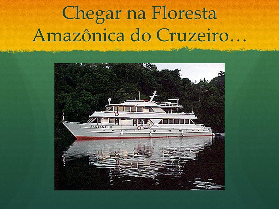 Chegar na Floresta Amazônica do Cruzeiro…