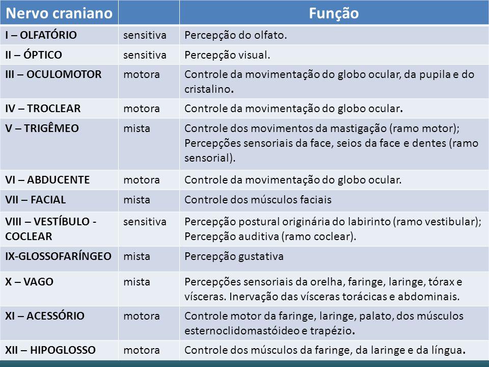 Nervo cranianoFunção I – OLFATÓRIOsensitivaPercepção do olfato.