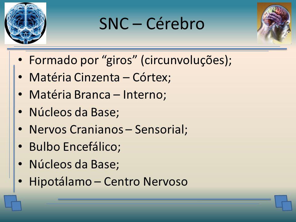 SNC – Cérebro Formado por giros (circunvoluções); Matéria Cinzenta – Córtex; Matéria Branca – Interno; Núcleos da Base; Nervos Cranianos – Sensorial; Bulbo Encefálico; Núcleos da Base; Hipotálamo – Centro Nervoso