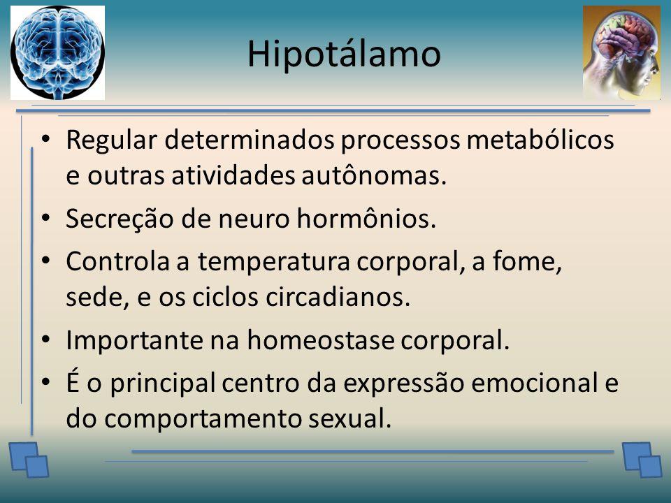 Hipotálamo Regular determinados processos metabólicos e outras atividades autônomas.