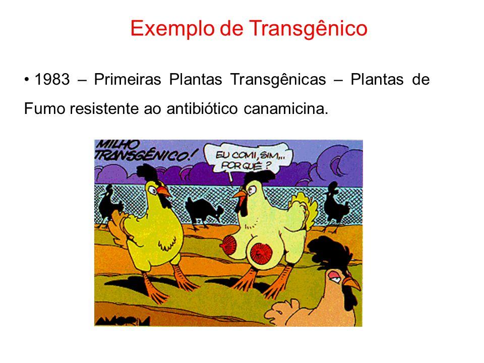 Exemplo de Transgênico 1983 – Primeiras Plantas Transgênicas – Plantas de Fumo resistente ao antibiótico canamicina.
