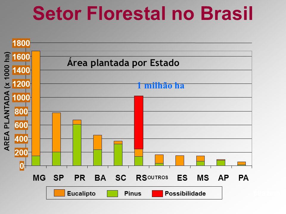 7 3 4 FLORESTAS PLANTADAS NO RS 1-SERRA – Pinus 2-LITORAL – Pinus 3-REGIÃO CENTRAL- Acácia Negra e Eucalipto 4-ZONA SUL/CAMPANHA- Eucalipto e Acácia Negra 5-SE 6-M 7-FRONTEIRA OESTE – Novo pólo florestal.