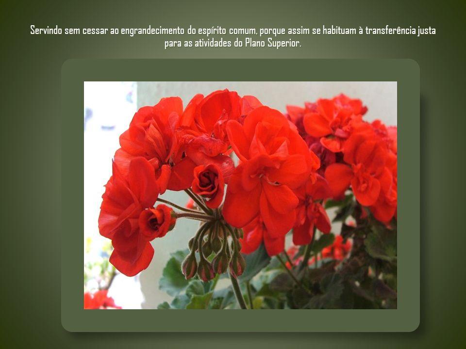 - Bem aventurados os que sofrem a perseguição ou incompreensão por amor à solidariedade, à ordem, ao progresso e à paz, reconhecendo acima da epiderme